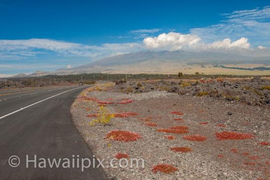 Mauna Loa From Saddle Road