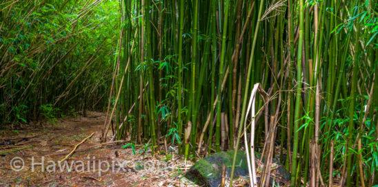 Judd Trail Bamboo
