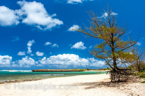 Mokuauia Island North
